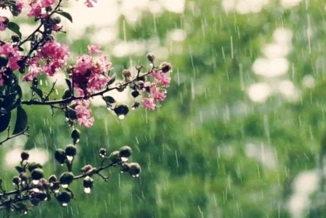 Вдень у Житомирі дощу не буде, але втримається доволі прохолодна погода: до +21