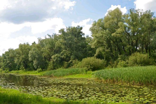 У Малинському районі створять три нових природних заказники площею майже 247 га