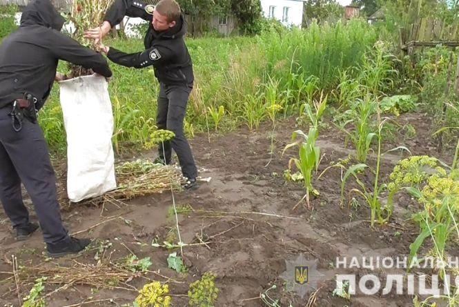 """Поліцейські продовжують """"збирати урожай"""" маку і коноплі на присадибних ділянках жителів Житомирщини"""
