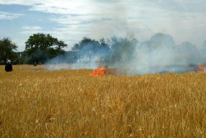 За час жнив на Житомирщині виникло 3 пожежі на полях із зерновими загальною площею 8,5 гектарів