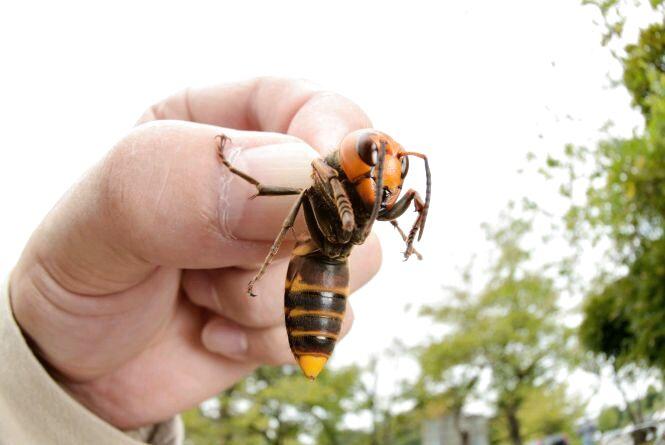 У Житомирі виявили небезпечних комах