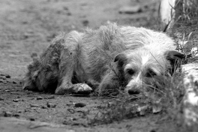 Житомирян турбує агресивність безхатніх тварин у місті