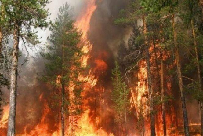 23-27 серпня в Україні надзвичайний рівень пожежної небезпеки