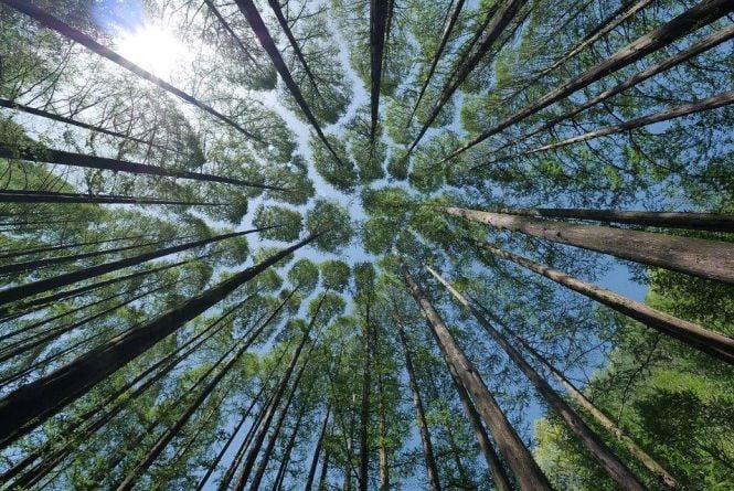 На Житомирщині, як і ще в 15 регіонах, можна перевірити онлайн законність деревини