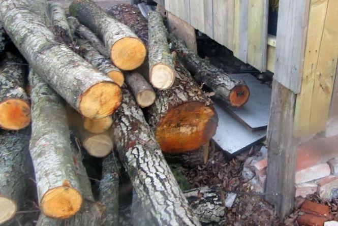 У Баранівському районі молодики викрали більше кубометра дубових і вільхових дров