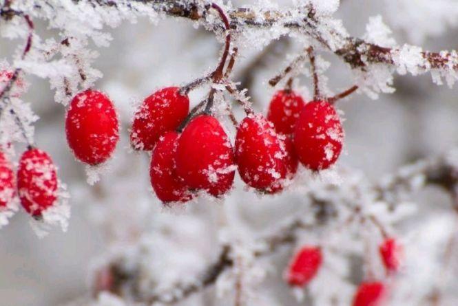 Погода у Житомирі 14 лютого: до +5 тепла, можливий дощ