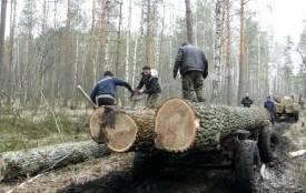 Крадіжки лісу на Житомирщині не припиняються