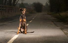 У Житомирі ДТП через собаку: постраждали жінка і дворічна дитина