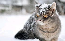 На Житомирщині погода ускладниться: буде мокрий сніг і сильний вітер