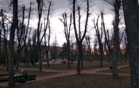 Шкідливий топінг: ще раз про кронування дерев у Житомирі